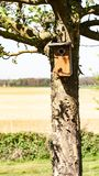 Birdhouse Брауна повиснул на хоботе дерева с полем на заднем плане стоковое фото rf