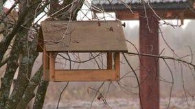 Birdhouse вися на дереве осенью сток-видео