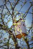 Birdhouse в дереве Стоковое Изображение