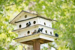 Birdhouse в на открытом воздухе национальном парке летом стоковые изображения