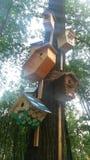 Birdhouse в парке Стоковое Фото