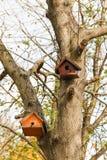 Birdhouse дерева в осени Стоковые Изображения