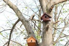 Birdhouse дерева в осени Стоковое фото RF