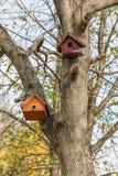 Birdhouse дерева в осени Стоковая Фотография RF