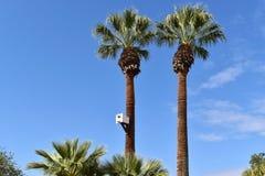 Birdhouse для сычей прикрепленных к оазису пальм протягивая к небу стоковые изображения rf