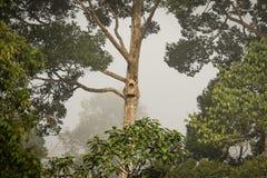 Birdhouse, коробка вложенности птицы в тропическом лесе, деревья и вегетация, Сабах, Борнео, Малайзия Стоковые Изображения RF