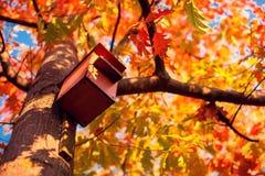 Birdhouse на дереве в парке осени стоковое фото
