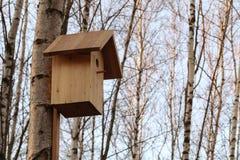 Birdhouse на дереве в предыдущем лесе березы весны стоковое изображение