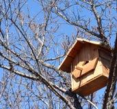 Birdhouse на дереве Стоковая Фотография
