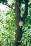 Birdhouse на дереве Стоковое Изображение