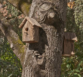 Birdhouse на дереве стоковое фото