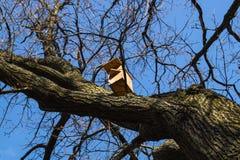 Birdhouse на чуть-чуть ветвях в предыдущей весне Стоковые Фото