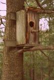 birdhouse осени выходит желтый цвет хворостин вала Стоковая Фотография