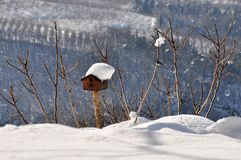 Birdhouse предусматриванный в снеге зимы Стоковое Изображение