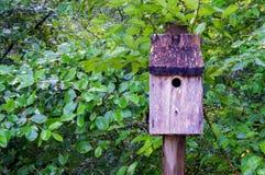 Birdhouse синей птицы стоковое фото rf