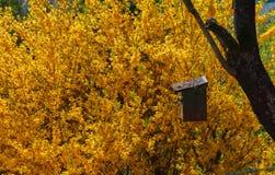 Birdhouse с желтой предпосылкой Стоковые Фотографии RF