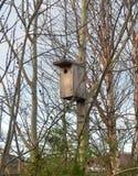 Birdhouse царствования на заходе солнца среди чуть-чуть, без листьев, ветви деревьев березы растя на моле города Стоковые Изображения