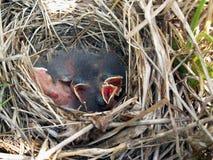 Birdhouse Immagini Stock Libere da Diritti