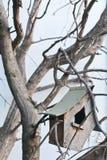 birdhouse Obraz Royalty Free