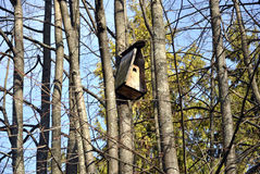 Birdhouse. Nesting-box and trees in early spring Royalty Free Stock Photos