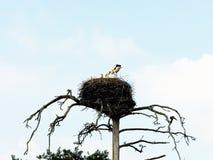 Birdhouse Royalty Free Stock Image
