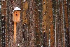Birdhouse. Bird nature nest pine winter orange Royalty Free Stock Photo