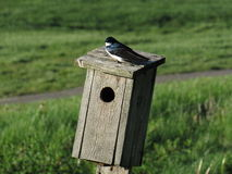 birdhouse Stockbild