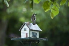 Birdhouse Zdjęcie Stock