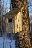 Birdhouse on Ash Tree stock photos