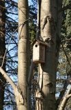 Birdhouse au printemps Photo stock