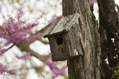Birdhouse auf einem alten Baum Lizenzfreies Stockfoto