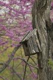 Birdhouse auf einem alten Baum Stockfoto