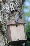 Birdhouse avec le jeune oiseau photographie stock libre de droits