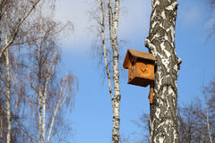 Birdhouse in the birch forest Stock Photos