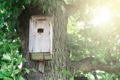 A birdhouse hanging on a tree, shelter for birds royalty free stock photography