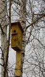 Birdhouse. On a birch tree.spring . in the spring birch Royalty Free Stock Image
