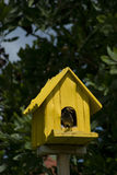 Birdhouse with bird Royalty Free Stock Photo
