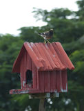 Birdhouse with bird Royalty Free Stock Photography