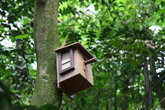 Birdhouse with bird inside. A birdhouse in the middle of forest with a bird inside, focus on the eye of the bird Royalty Free Stock Images