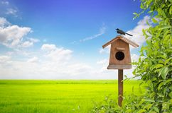Birdhouse and bird with meadow Royalty Free Stock Photos