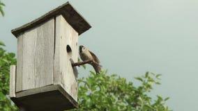 Birdhouse with bird stock video