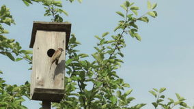 Birdhouse with bird stock video footage