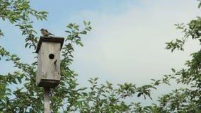Birdhouse with bird stock footage