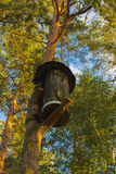 Birdhouse for birds on a high tree Stock Image