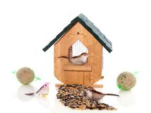 A birdhouse with birds and seeds Royalty Free Stock Photos