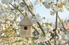 Birdhouse with blossom cherry flower royalty free stock photography