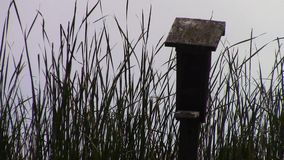 Birdhouse and Cattails stock video footage
