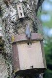 Birdhouse com pássaro novo Fotografia de Stock Royalty Free