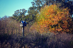 Birdhouse in the Country Royalty Free Stock Photos