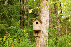 A birdhouse at the cradle of forestry Royalty Free Stock Photos